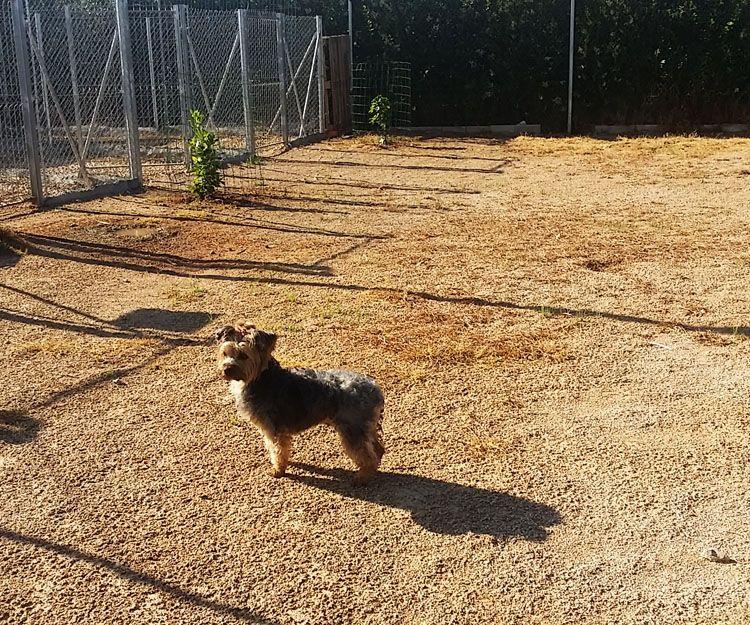 Curso de adiestrador canino en Carcaixent