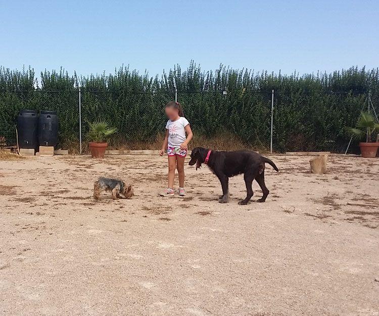 Residencia de mascotas en Alzira