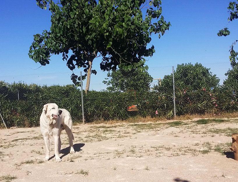 Curso de adiestrador canino en l´Alcúdia