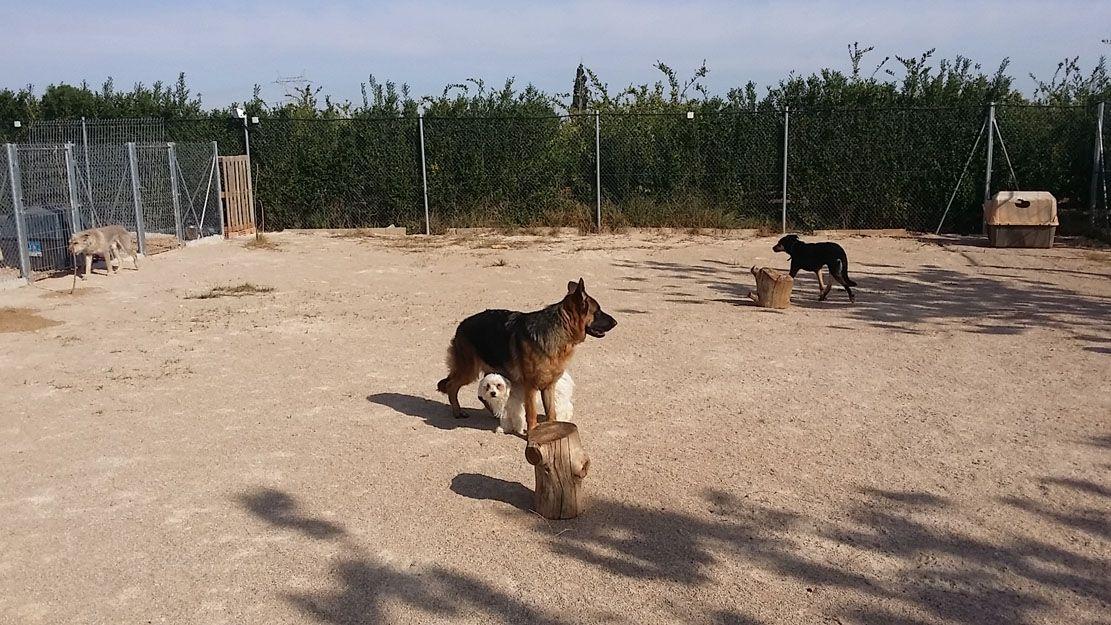 Curso de adiestrador canino en Algemesí