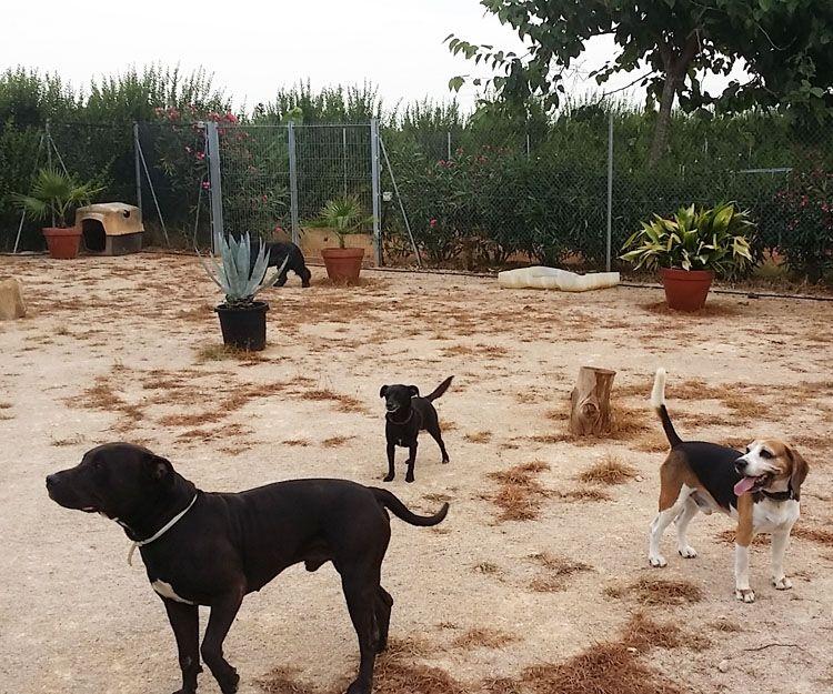 Residencia canina en Valencia