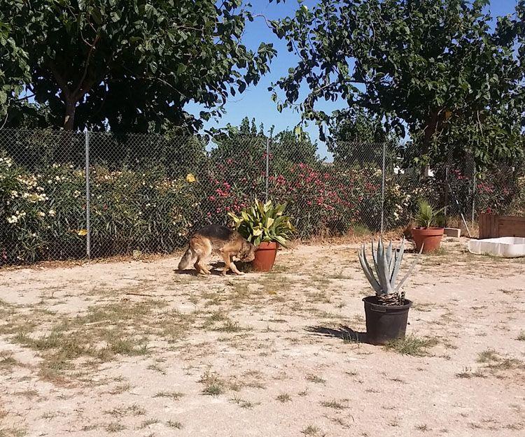 Residencia canina en Carcaixent