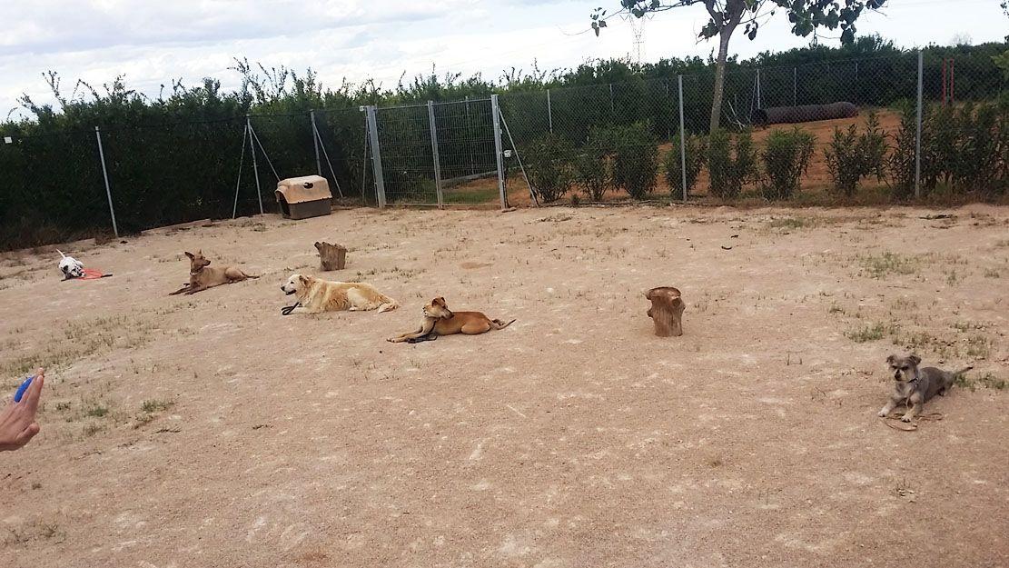 Cursos de adiestramiento canino en Alzira
