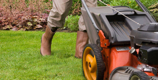 Mantenimiento de jardines en El Ejido