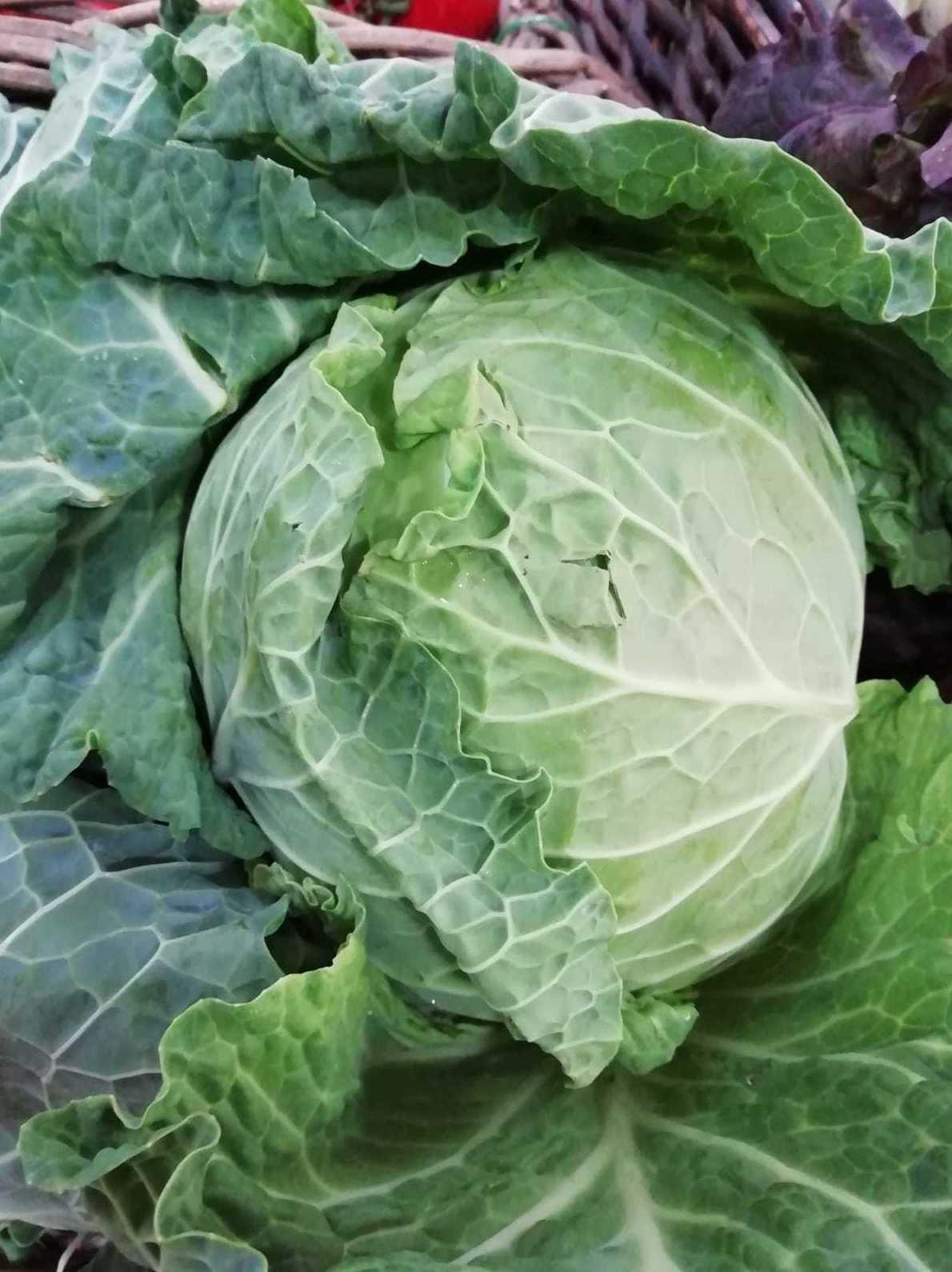 Foto 42 de Tienda de alimentos ecológicos en  | Gust i Colors