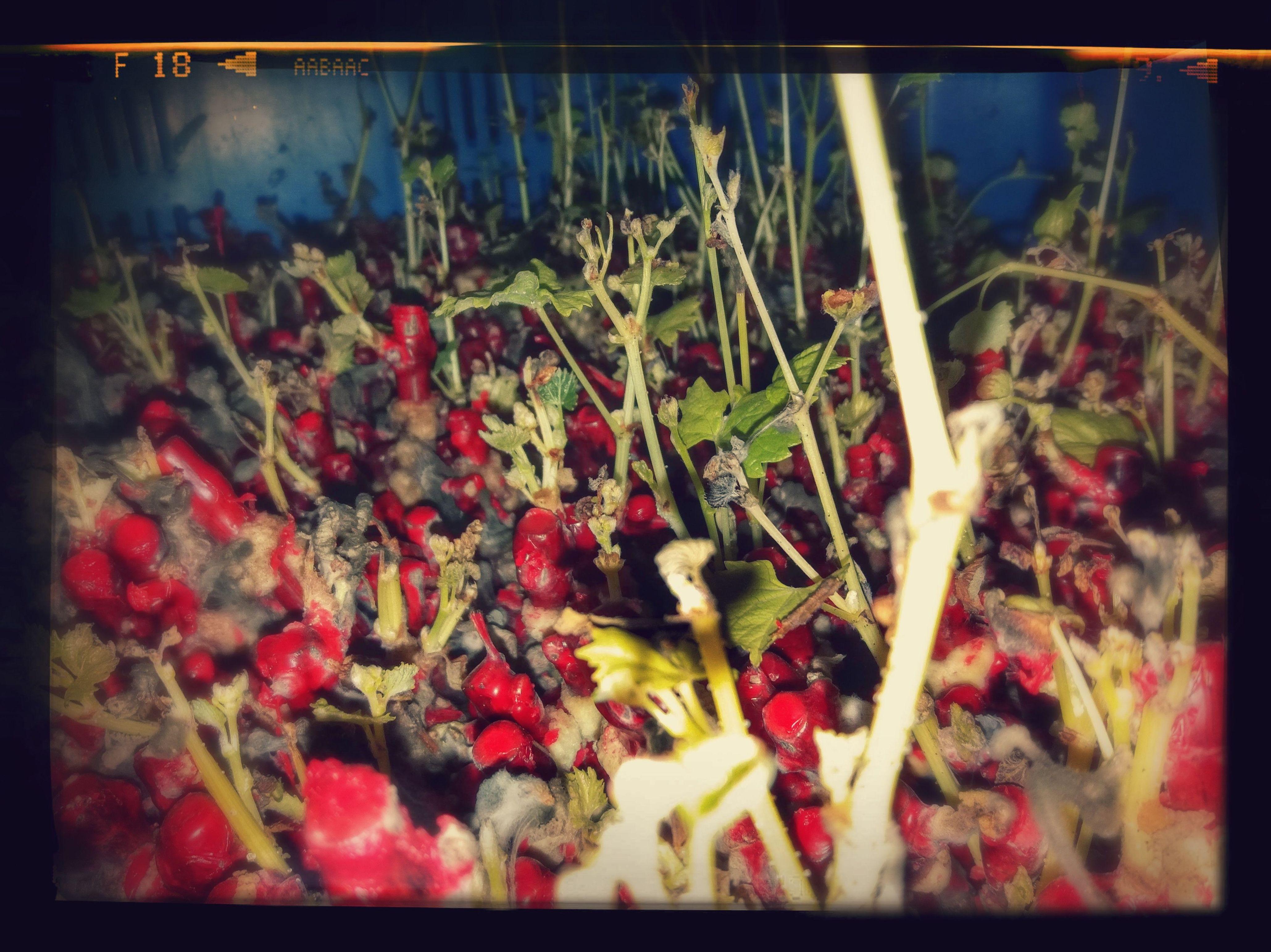 Foto 4 de Viveros agrícolas y forestales en Aielo de Malferit | Viveros Vila