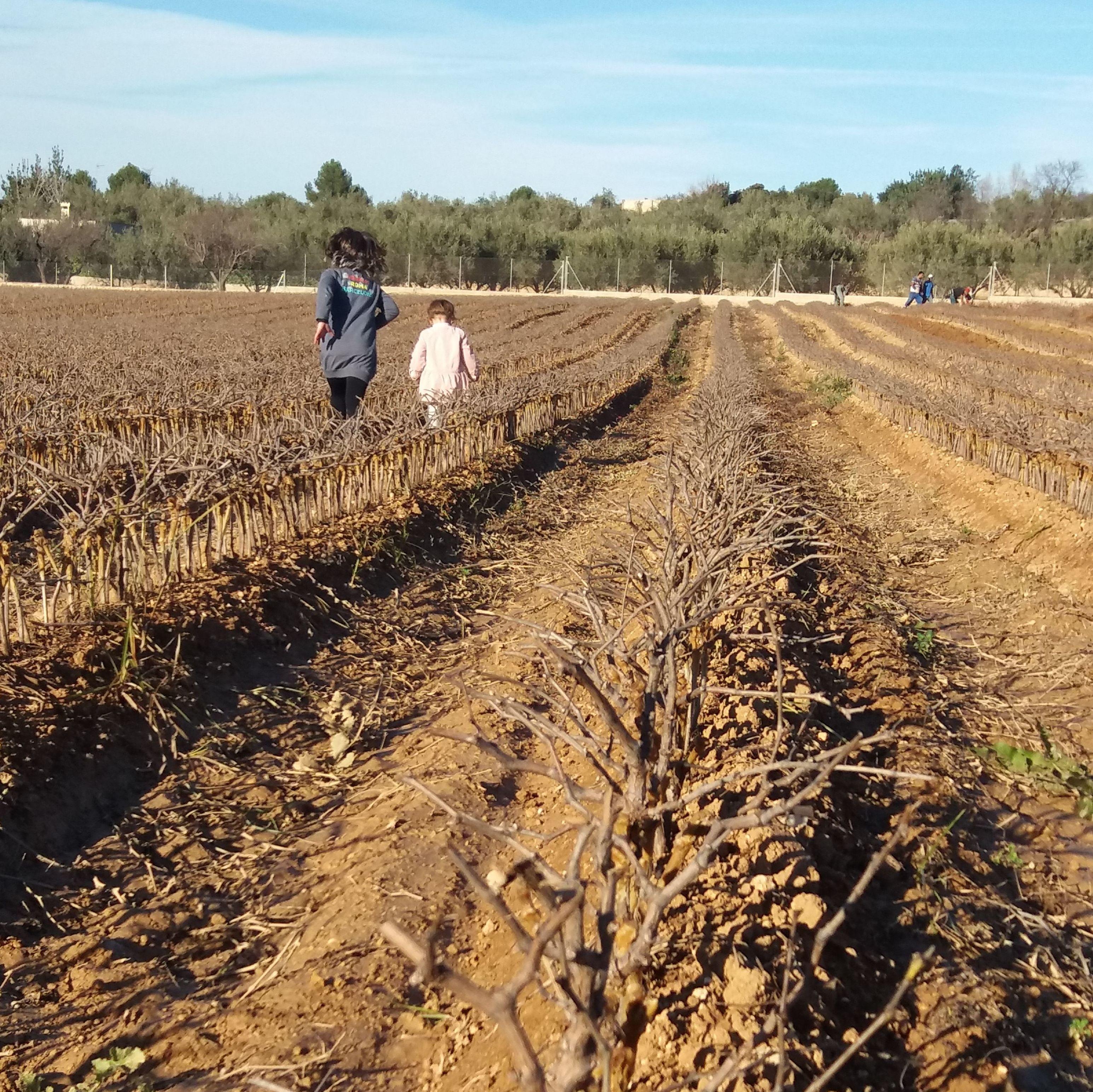 Foto 7 de Viveros agrícolas y forestales en Aielo de Malferit | Viveros Vila