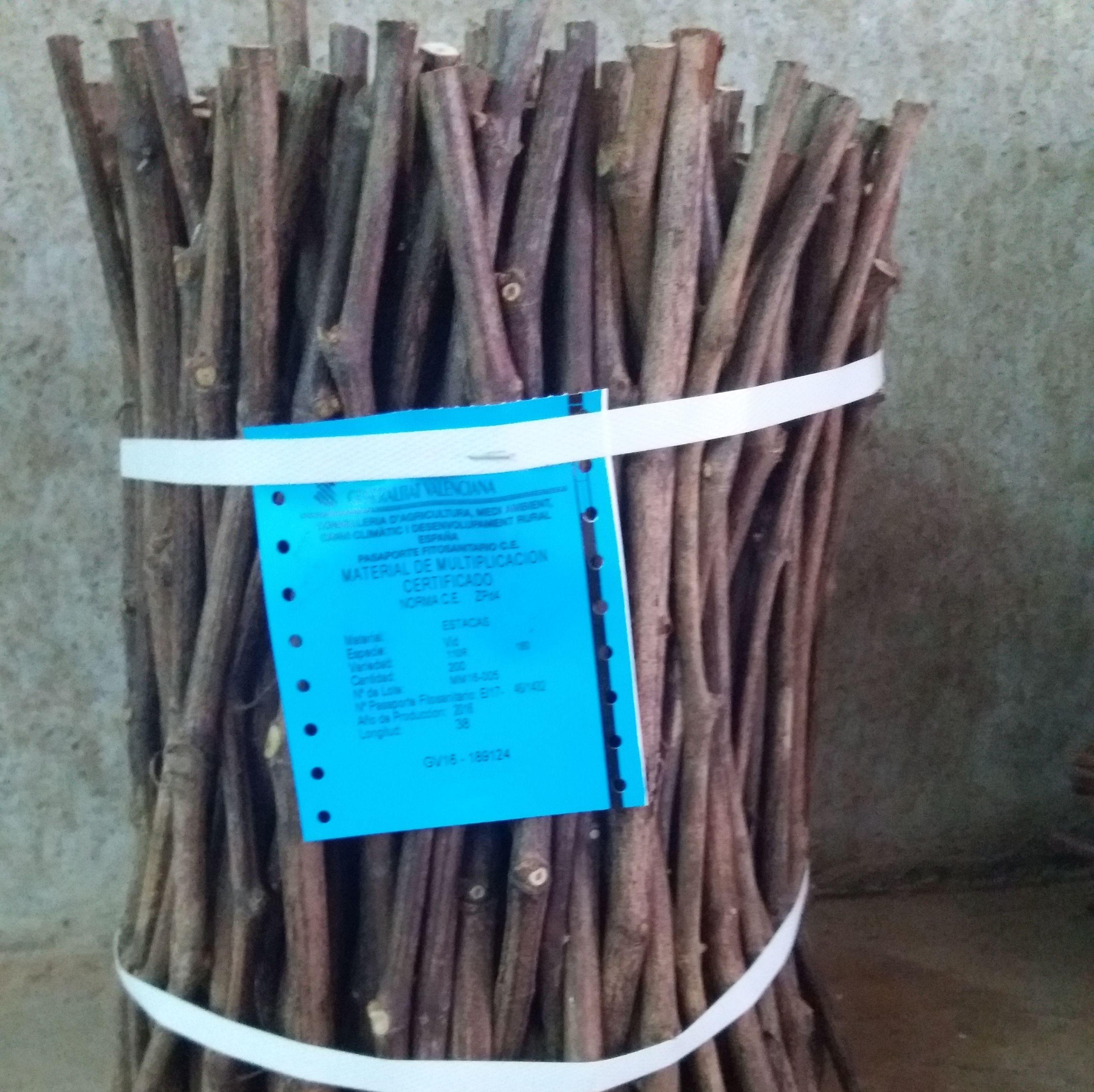 Foto 10 de Viveros agrícolas y forestales en Aielo de Malferit | Viveros Vila
