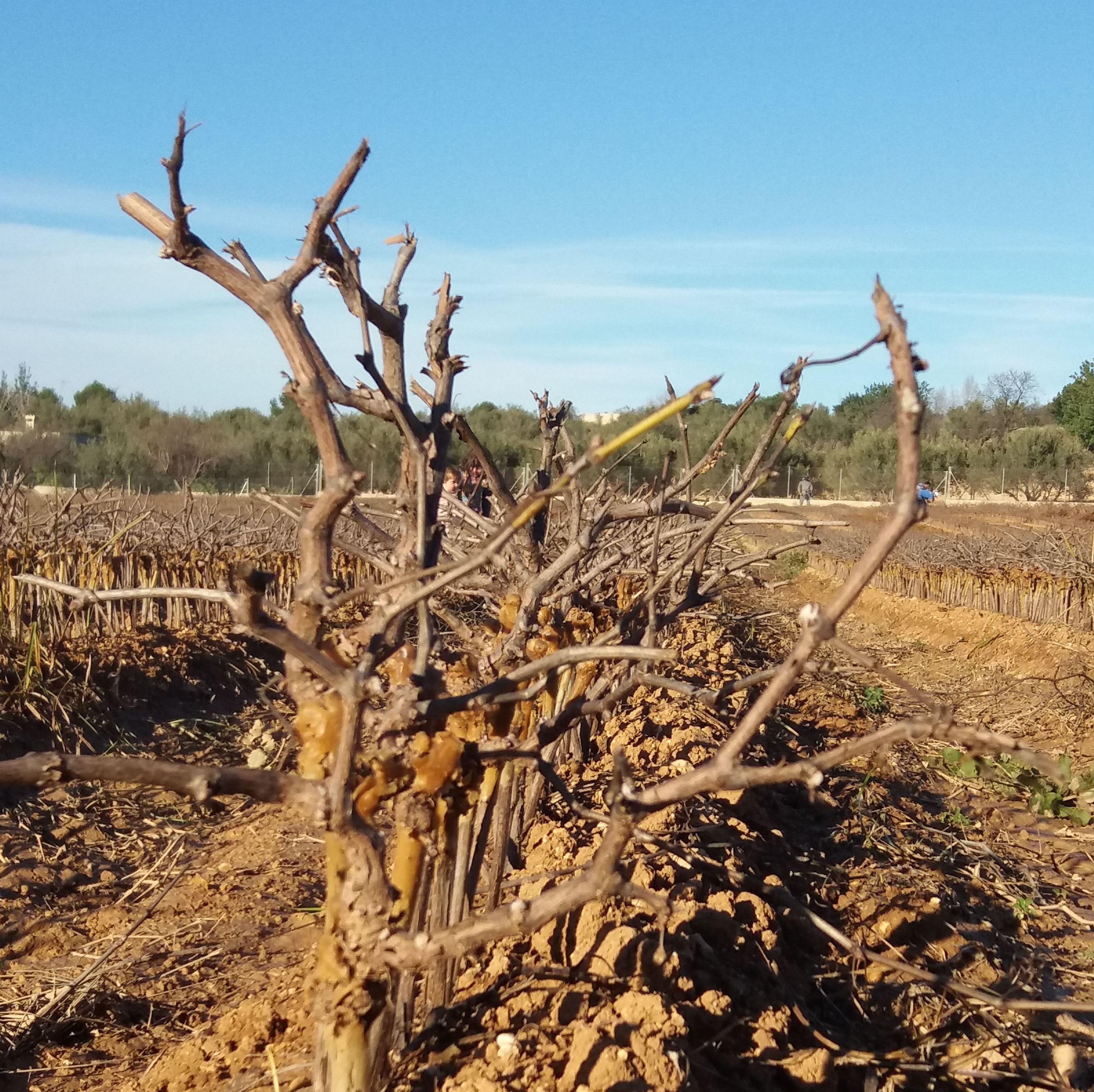 Foto 8 de Viveros agrícolas y forestales en Aielo de Malferit | Viveros Vila