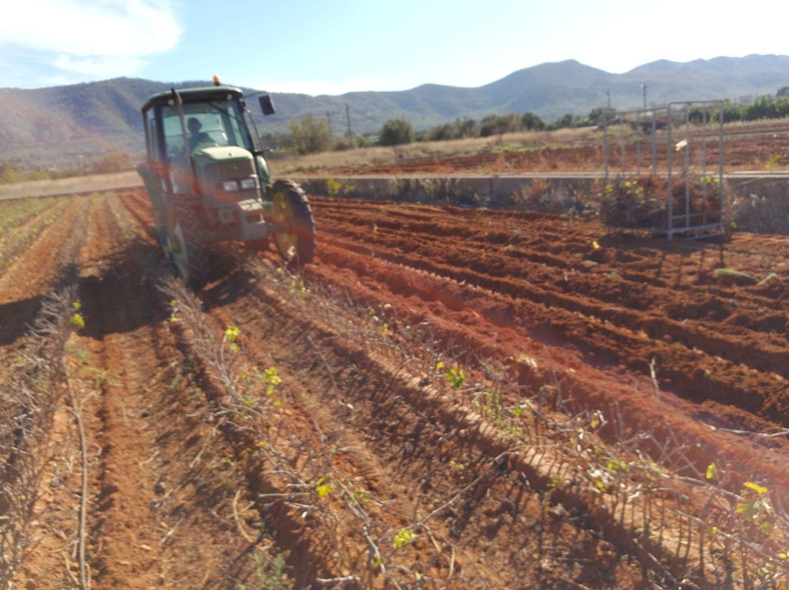 Foto 1 de Viveros agrícolas y forestales en Aielo de Malferit | Viveros Vila