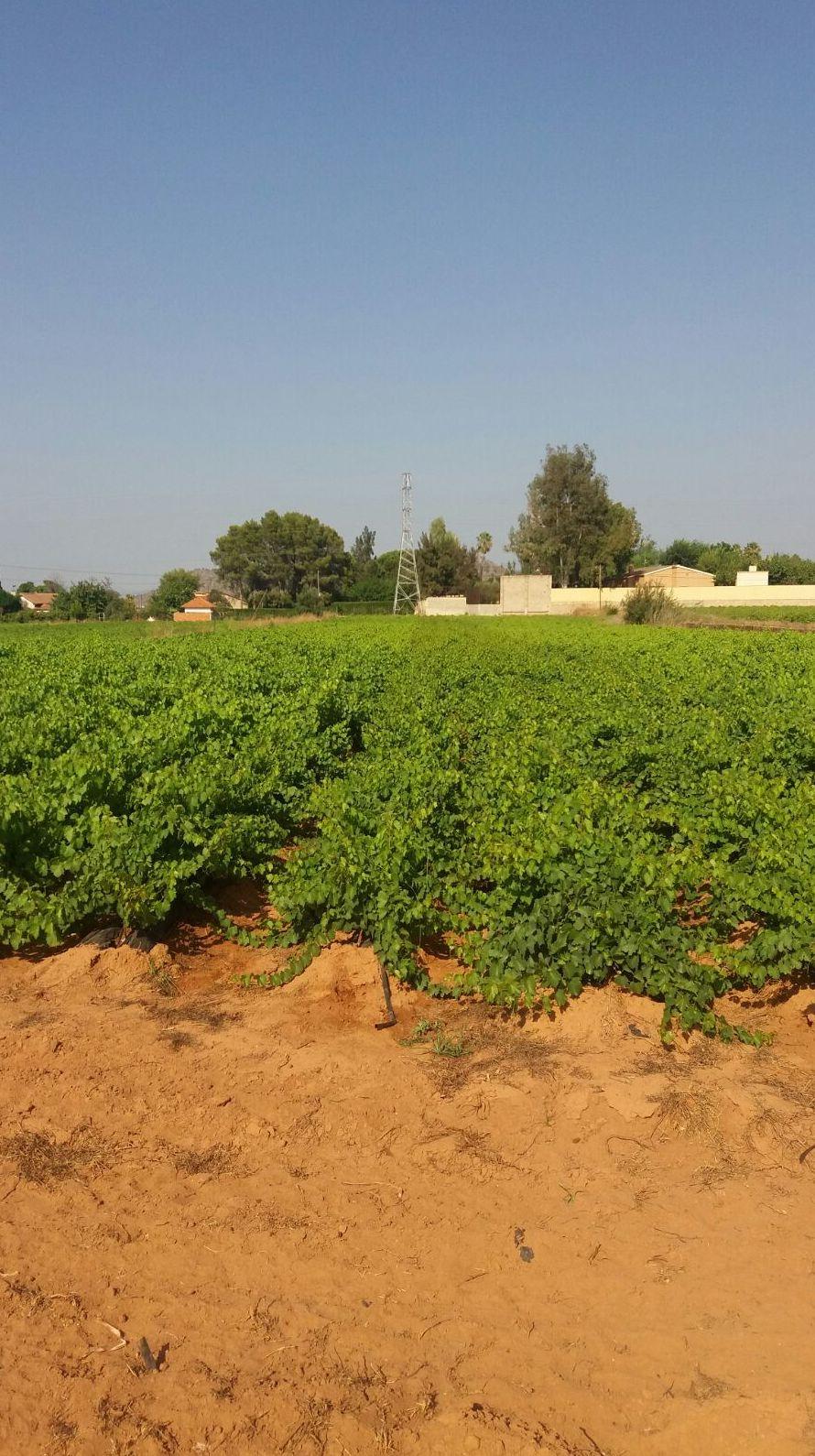 Foto 2 de Viveros agrícolas y forestales en Aielo de Malferit | Viveros Vila