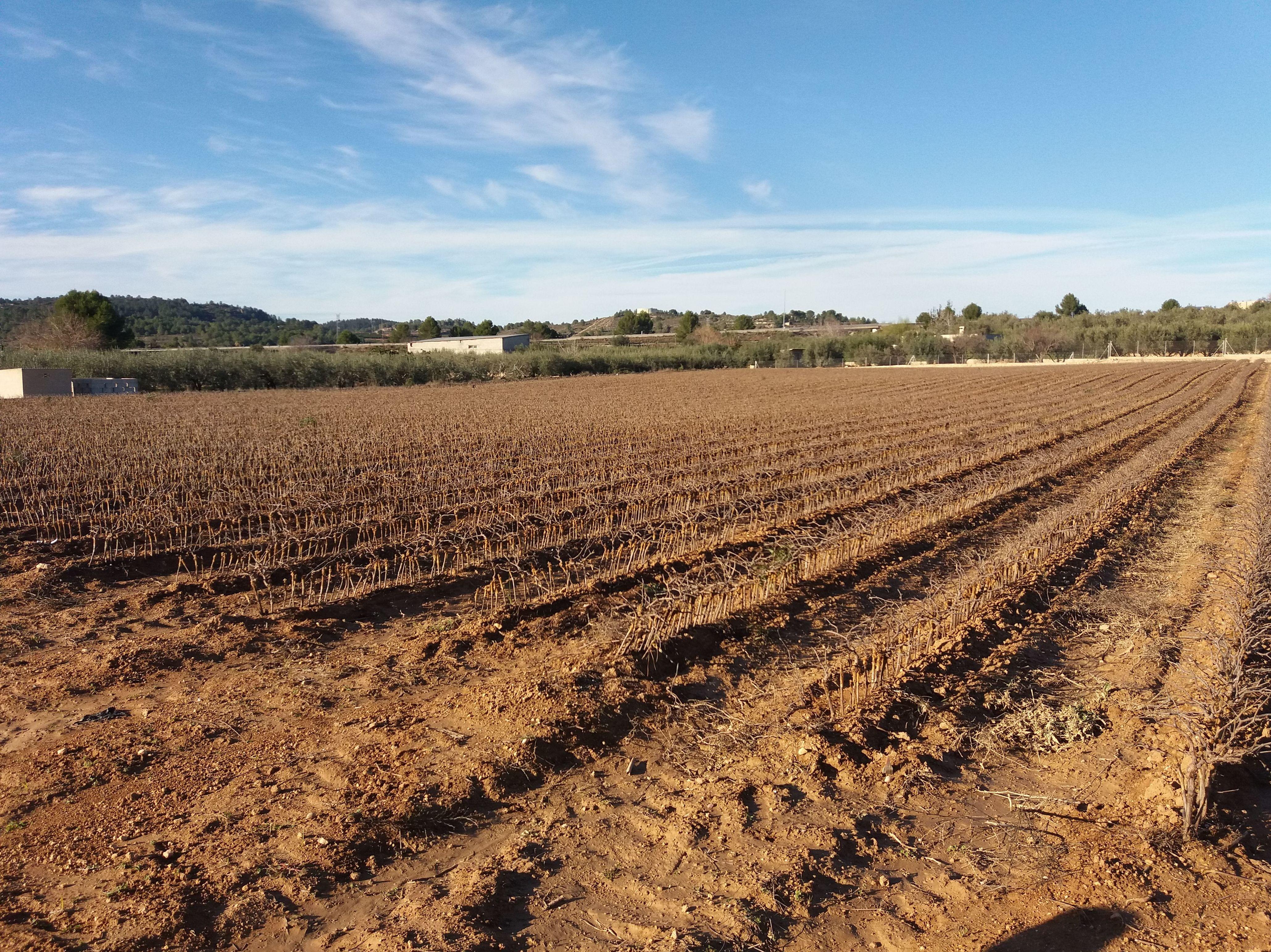 Foto 6 de Viveros agrícolas y forestales en Aielo de Malferit | Viveros Vila
