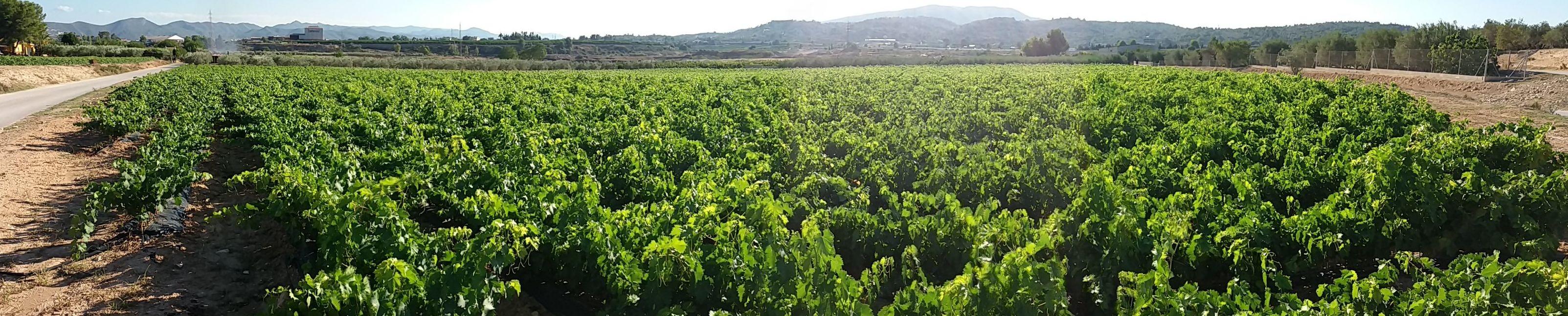 Foto 11 de Viveros agrícolas y forestales en Aielo de Malferit | Viveros Vila