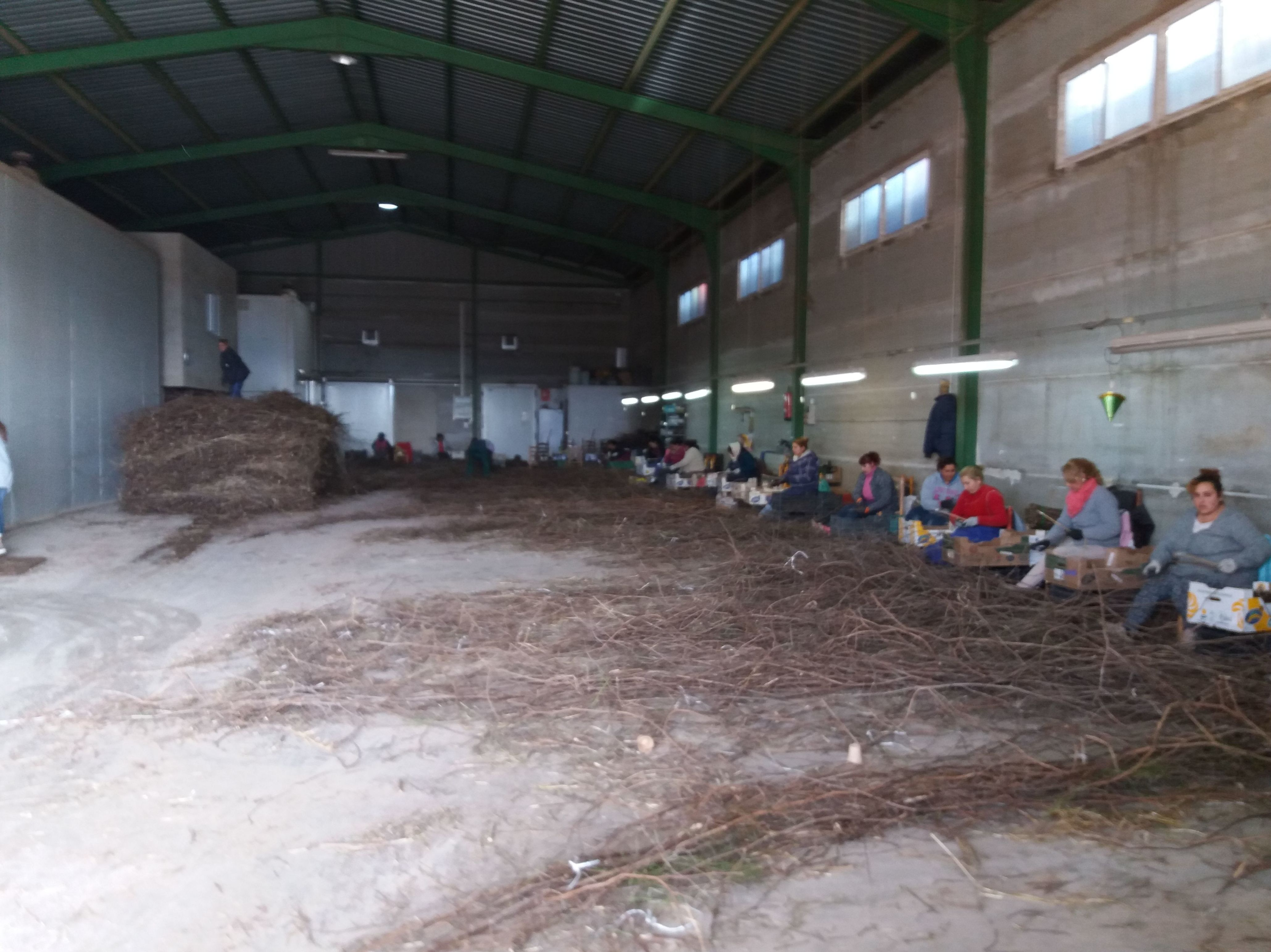 Foto 9 de Viveros agrícolas y forestales en Aielo de Malferit | Viveros Vila
