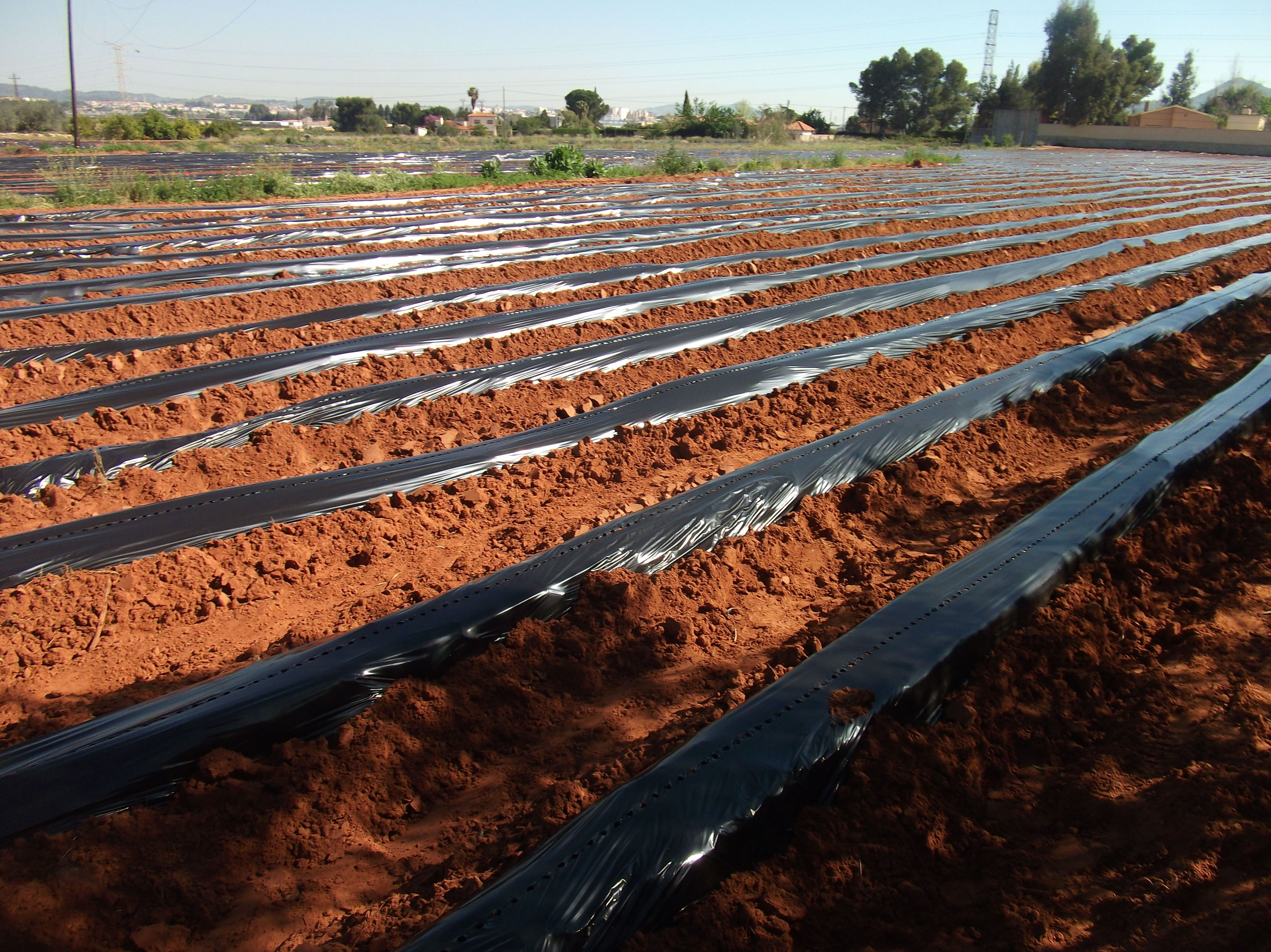 Foto 23 de Viveros agrícolas y forestales en Aielo de Malferit | Viveros Vila
