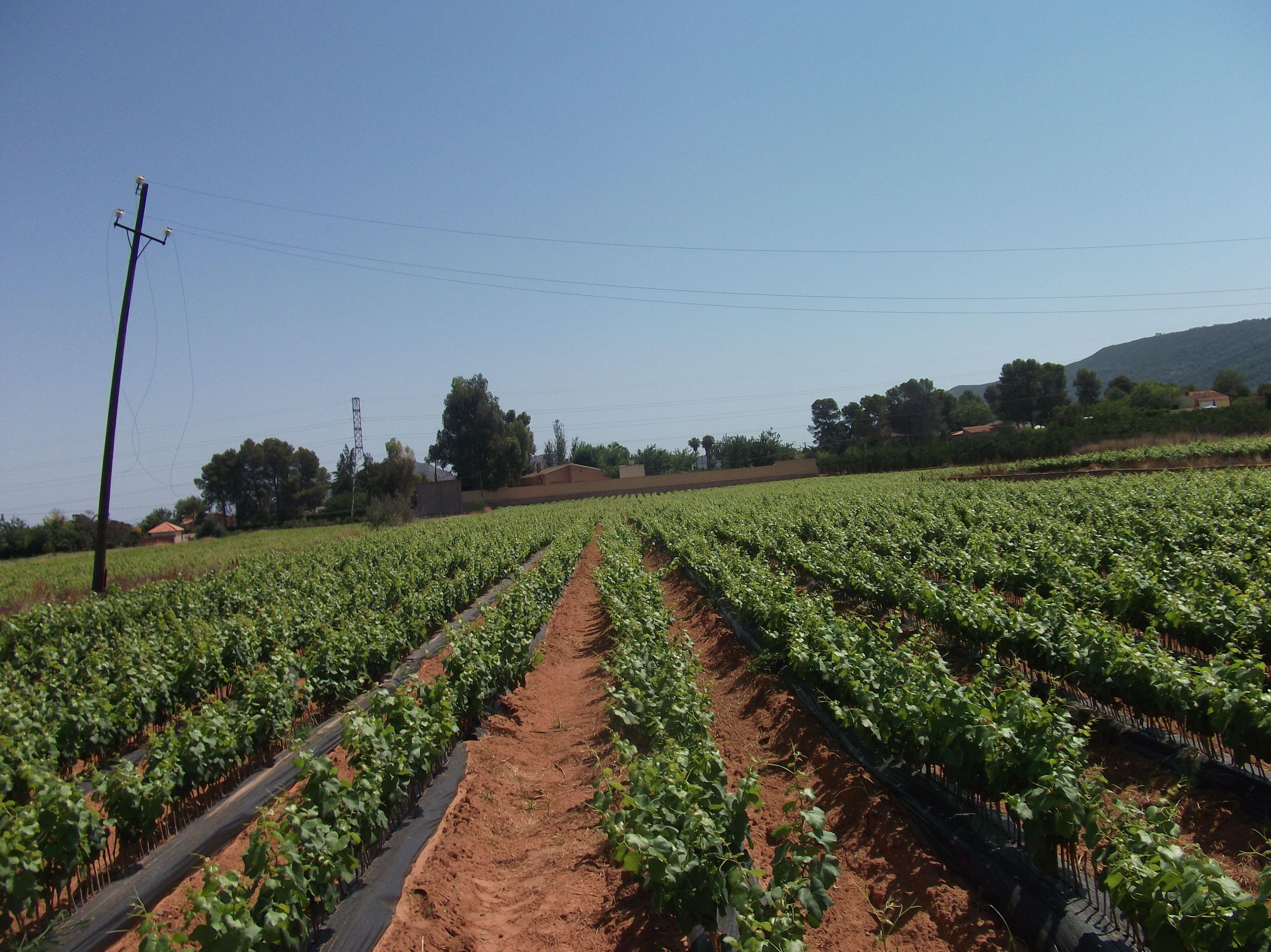 Foto 28 de Viveros agrícolas y forestales en Aielo de Malferit | Viveros Vila