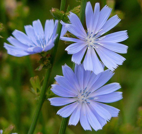 Ayuda para el estrés con flores de Bach - Terapias altenativas Isabel