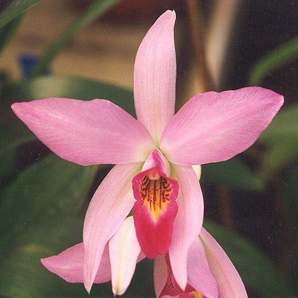 Orquídea del Ser Superior : Terapias de Terapias Alternativas Isabel