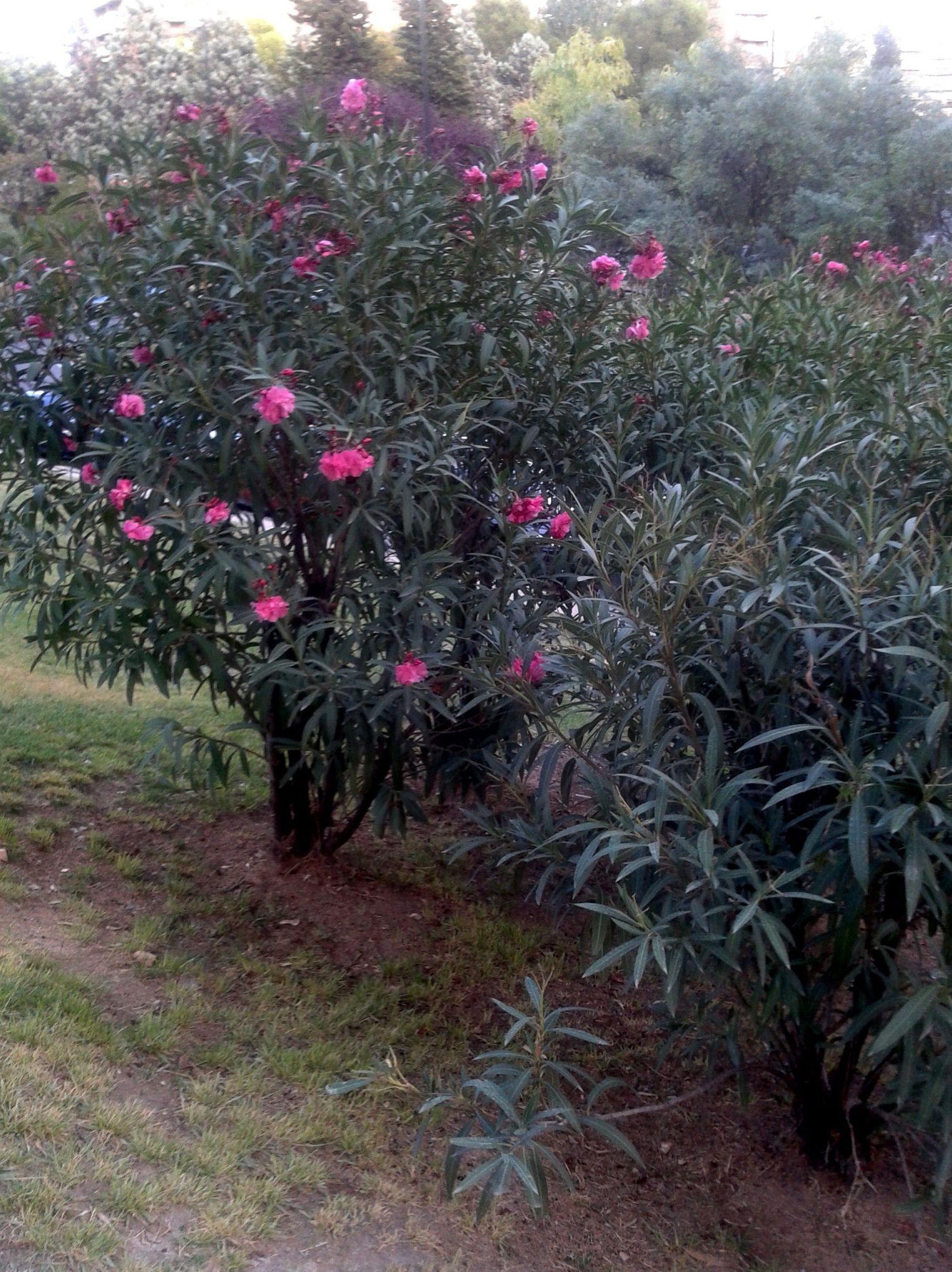 Crecimiento personal con las flores de Bach en Zaragoza