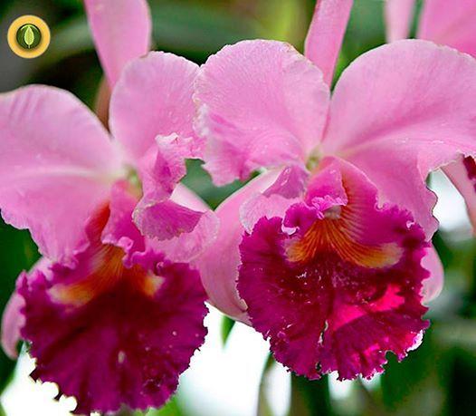 Orquídea Corazón : Terapias de Terapias Alternativas Isabel