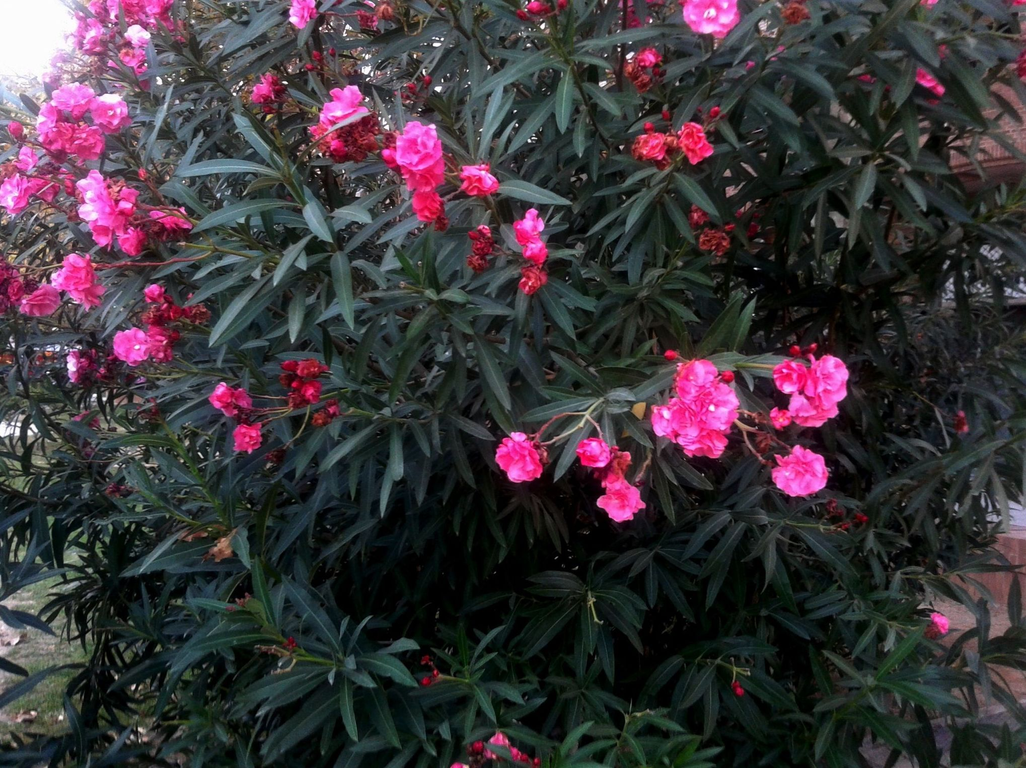 Procesos de sanación con flores Bach