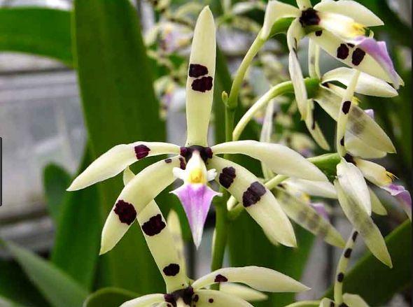Orquídea Deva : Terapias de Terapias Alternativas Isabel