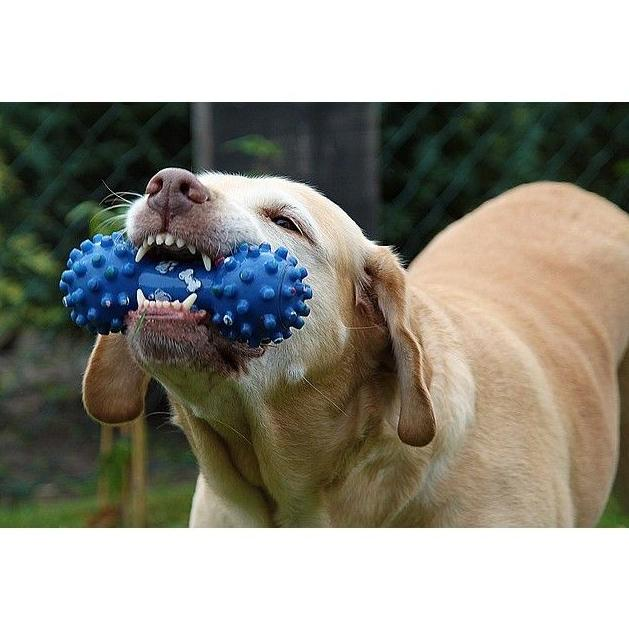Mascotas: Productos y Servicios de Comercial Hoznayo, S.L.