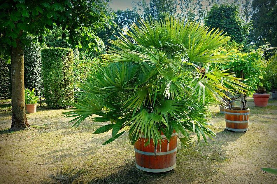 Servicios de jardinería: Servicios de Ecollenya