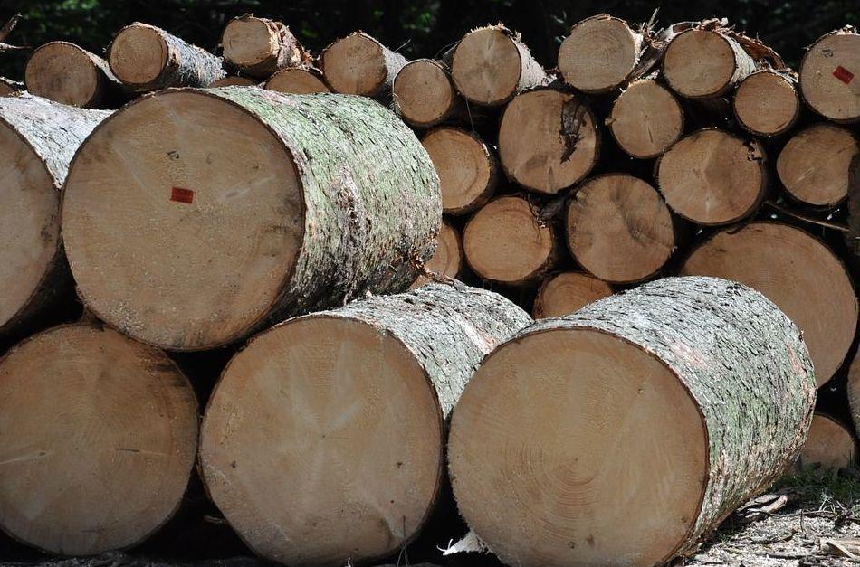Aserradero de madera: Productos y servicios de Maderas Joaquín Perea Jurado e Hijos
