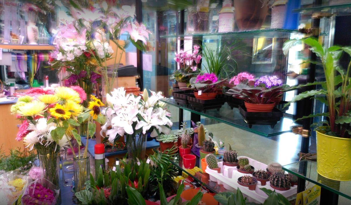 Flores y plantas en Alcalá de Henares