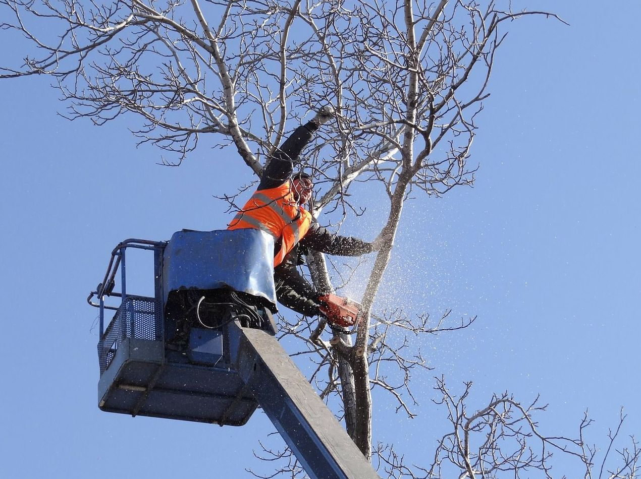 Poda de árboles ornamentales y frutales