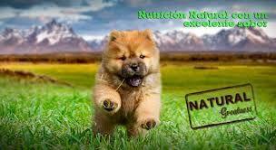 Foto 19 de Tienda de complementos para mascotas en    Valla Mascotas