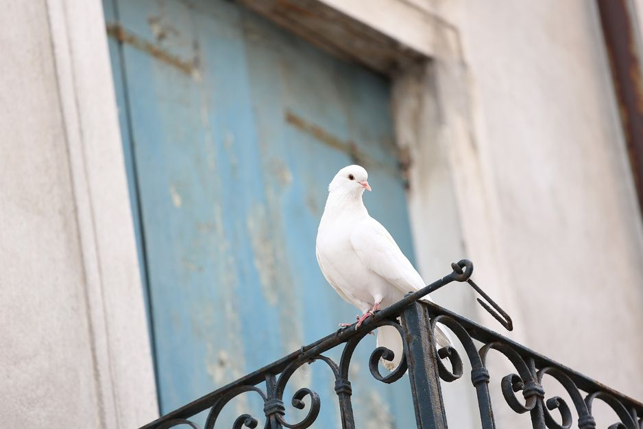 Control de aves en Palma de Mallorca