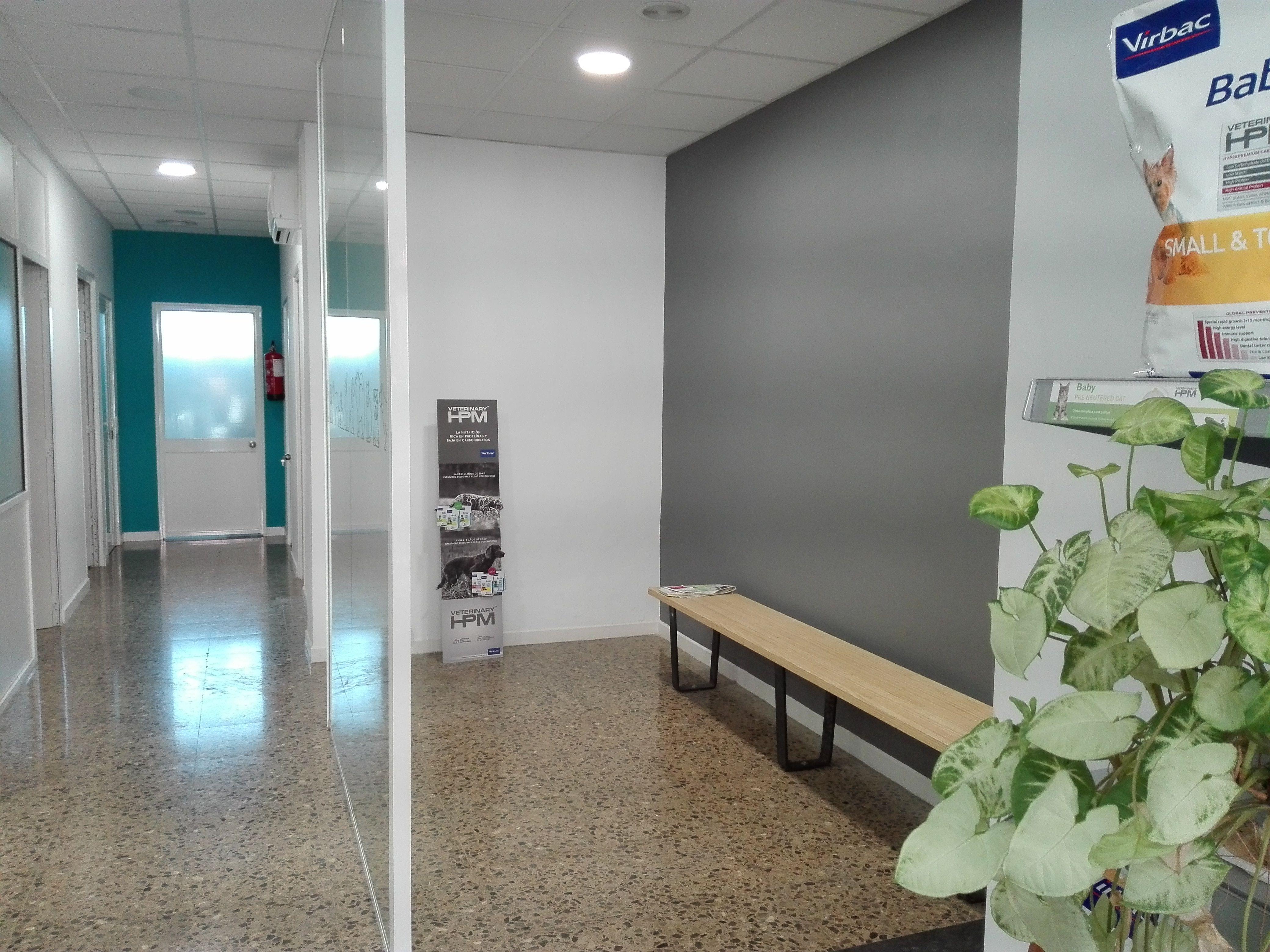 Foto 22 de Veterinarios en Sant Sadurní d'Anoia | Veterinaria Animavet