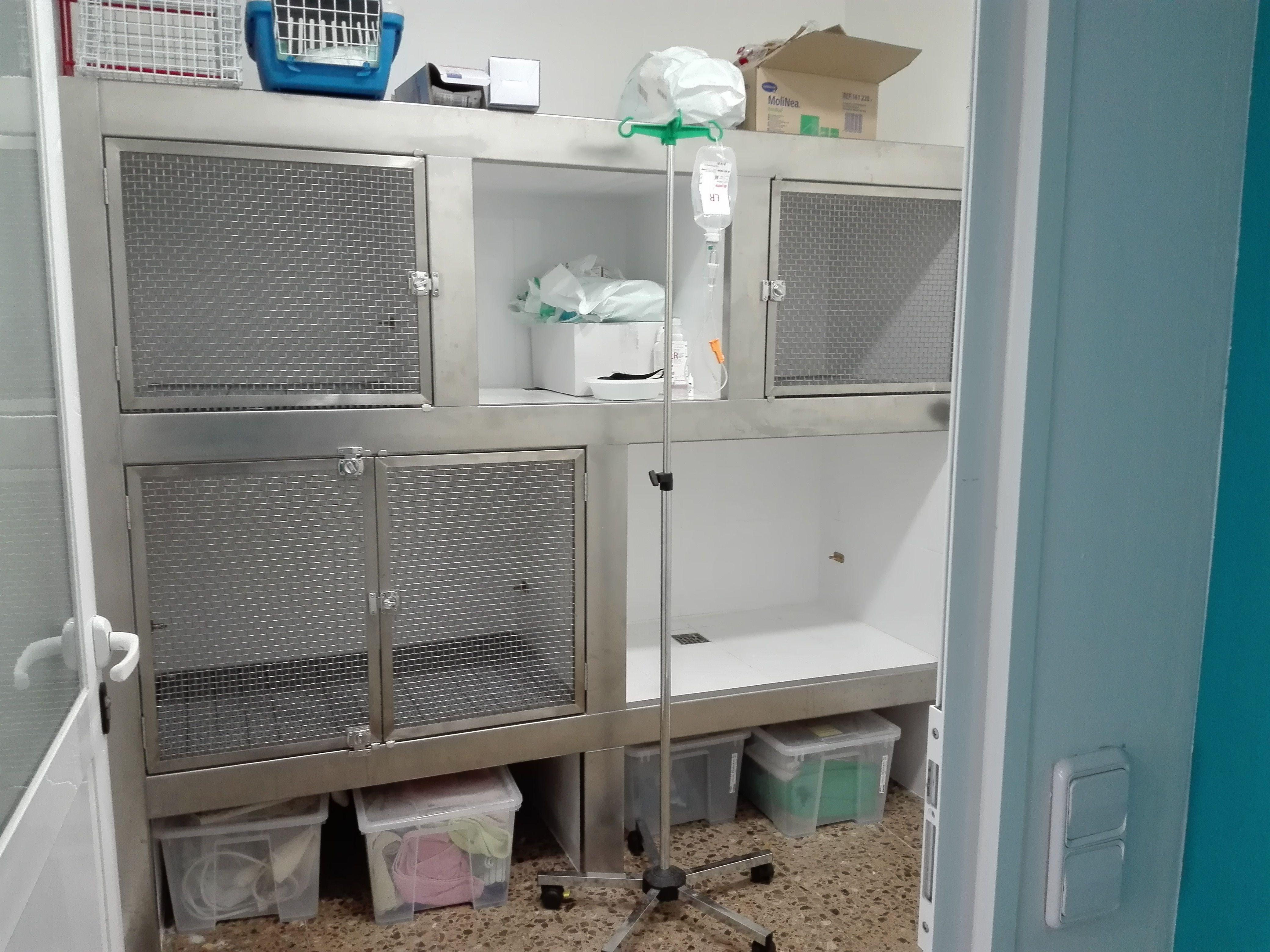 Foto 5 de Veterinarios en Sant Sadurní d'Anoia | Veterinaria Animavet