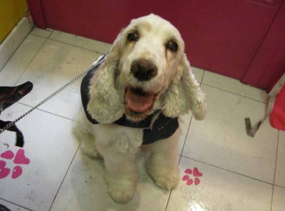 Foto 37 de Peluquerías caninas en Madrid | La Pelu de Ricki