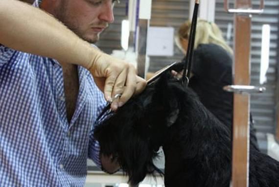 Foto 32 de Peluquerías caninas en Madrid | La Pelu de Ricki