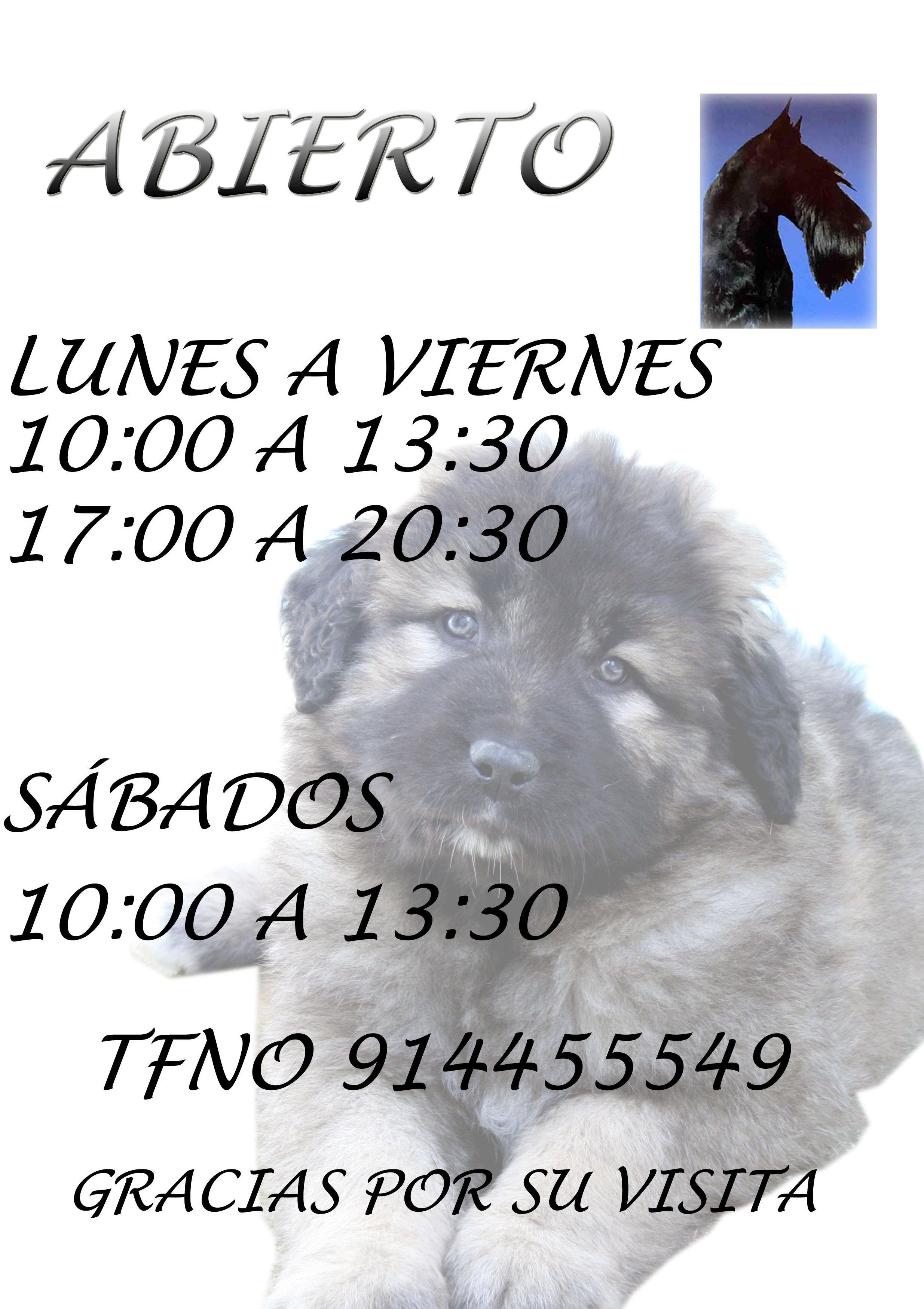 Foto 25 de Peluquerías caninas en Madrid | La Pelu de Ricki