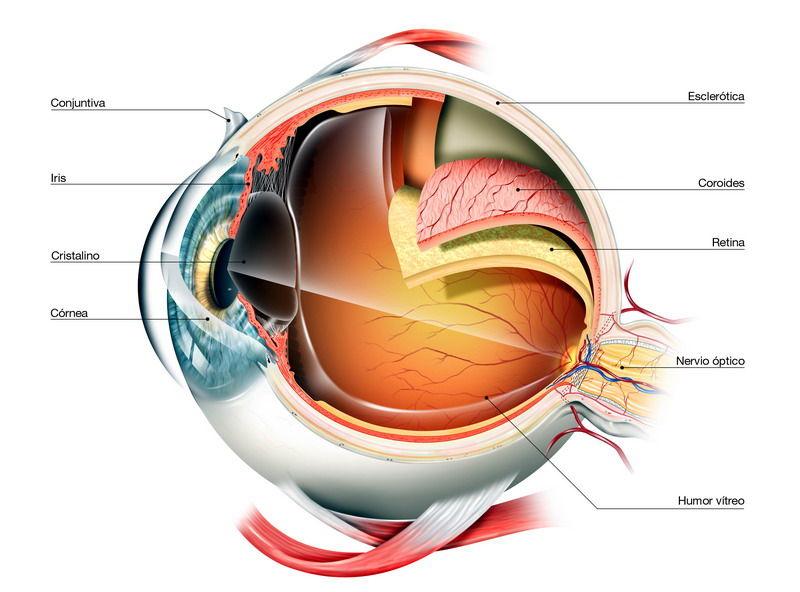 Retina/Vitreo:  Especialidades Oftalmológicas de Clínica Rementeria