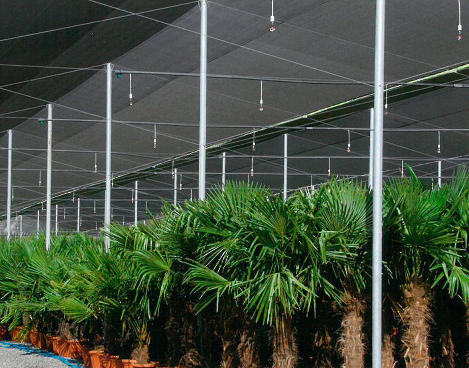 Foto 103 de invernaderos en torrent invernaderos campos for Vivero estructura