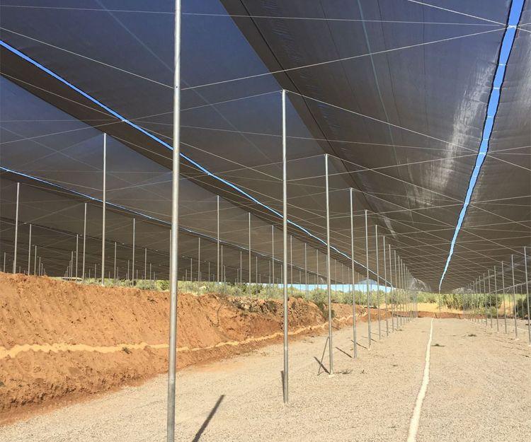 Foto 4 de invernaderos en torrent invernaderos campos - Empresas construccion valencia ...