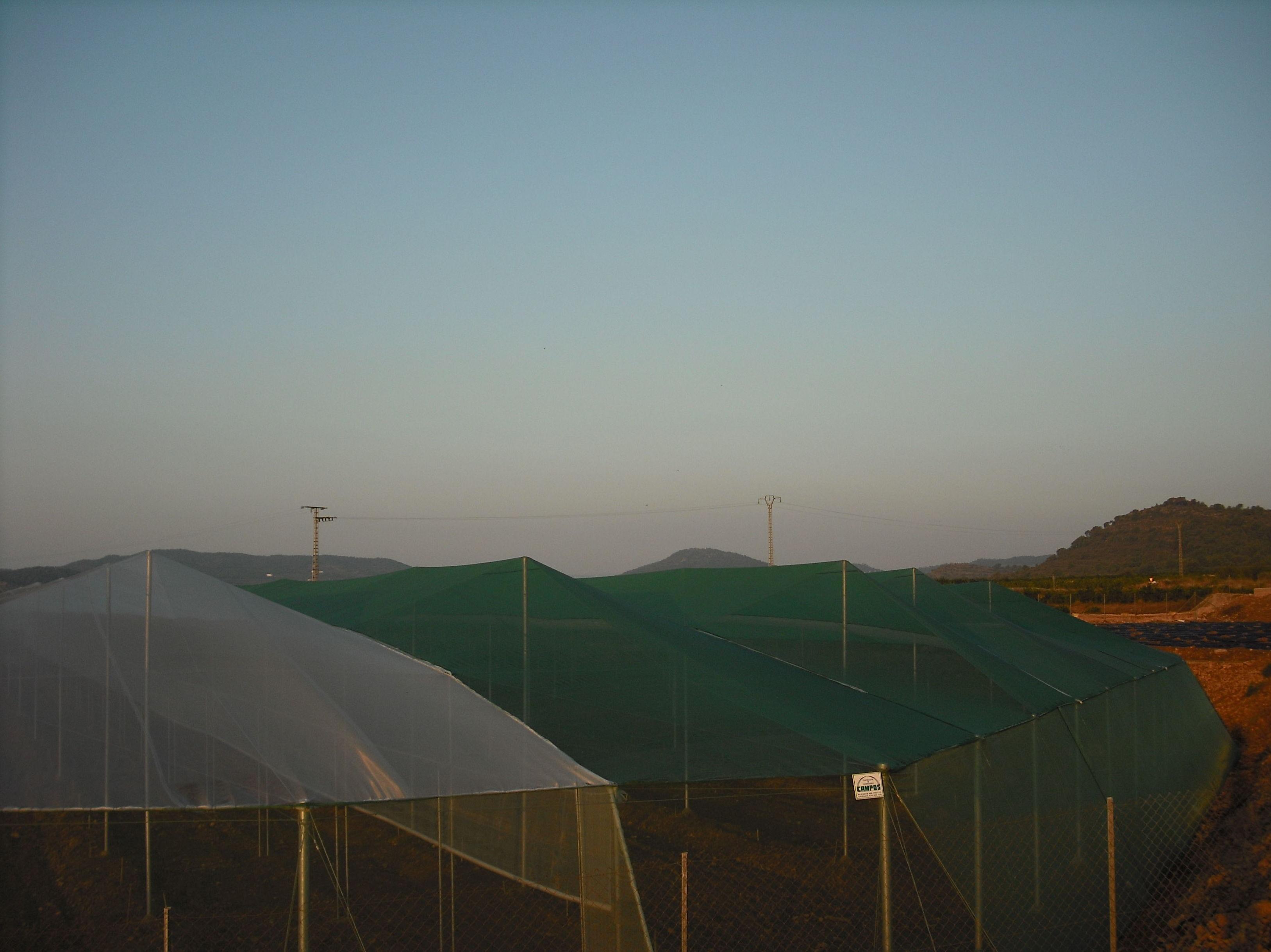 Foto 39 de Invernaderos en Torrent | Invernaderos Campos