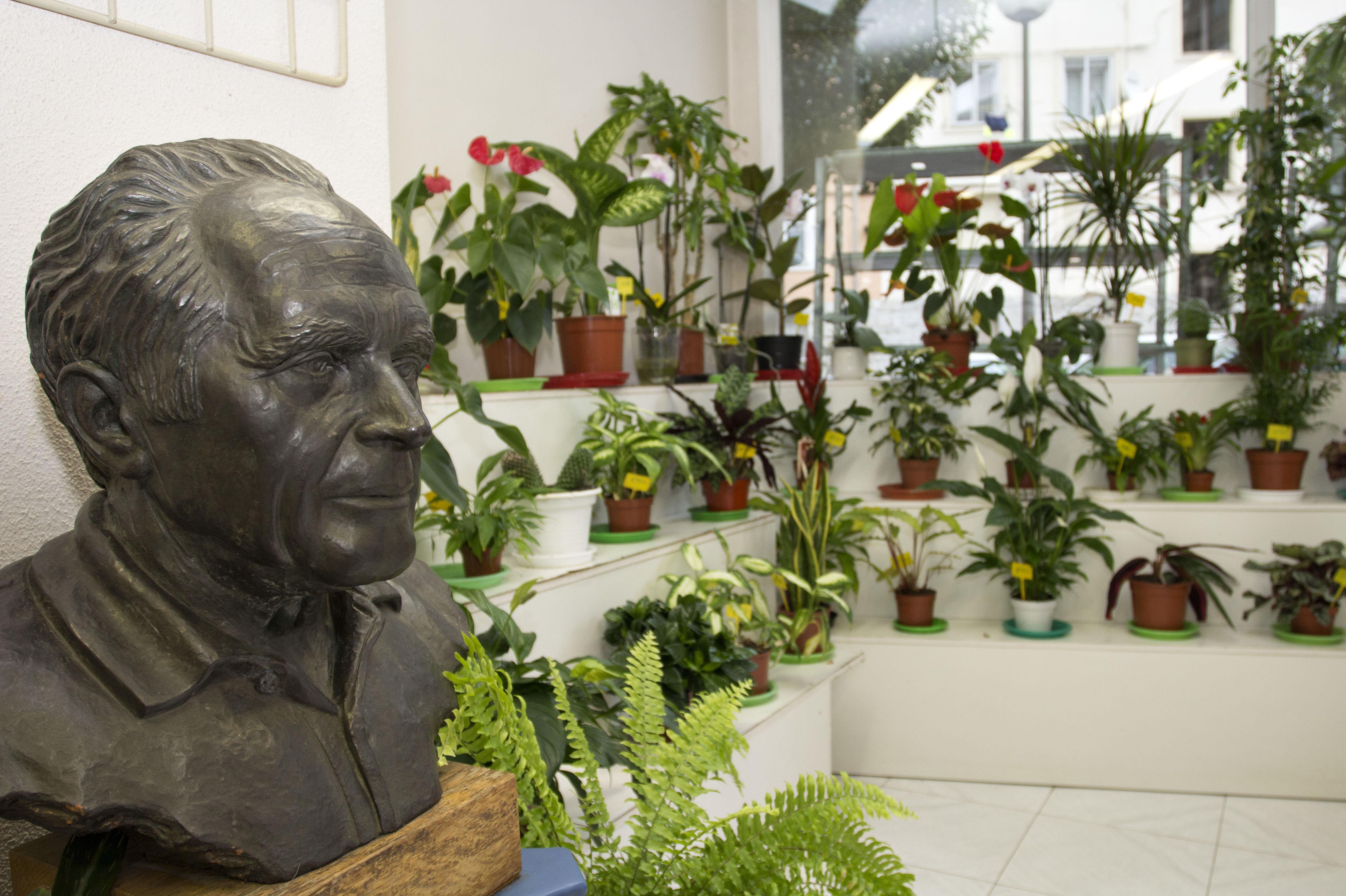 Plantas y flores en Vitoria-Gasteiz, Álava