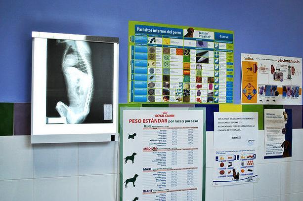 Clínica Veterinaria Huellas - Móstoles