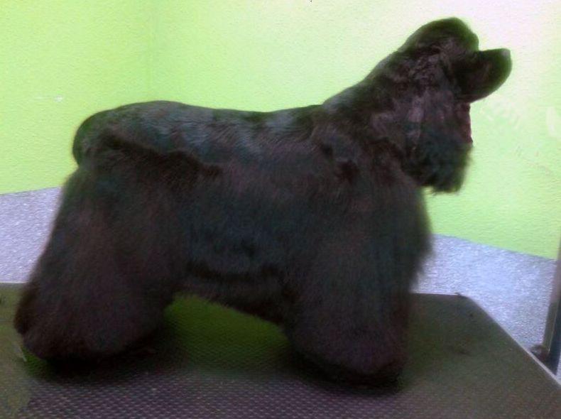 Profesionales peluqueros caninos