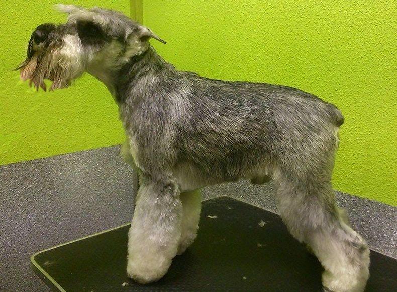 Especialistas en peluquería canina
