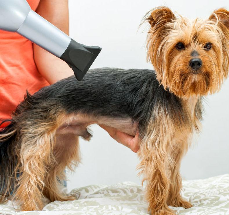 Academia de peluquería canina en Fuenlabrada (Madrid)