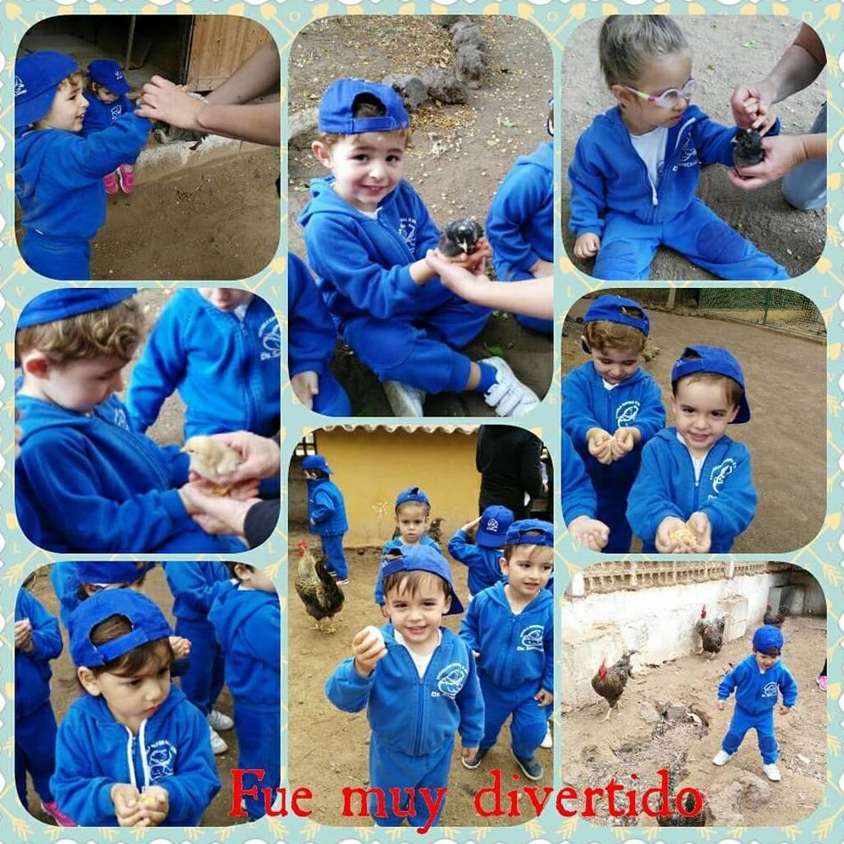 Foto 238 de Guarderías y Escuelas infantiles en Las Palmas de Gran Canaria | Escuela Maternal Infantil Dr.Sánchez