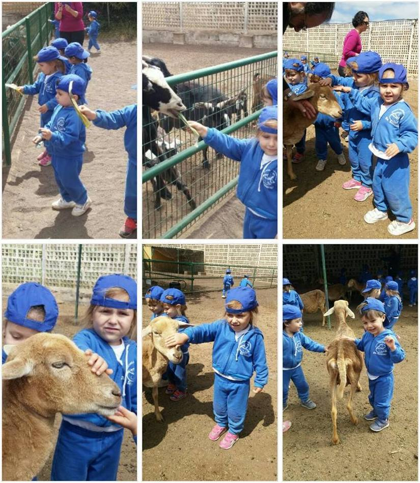 Así interactuamos con los animales de la Granja del Tío Isidro