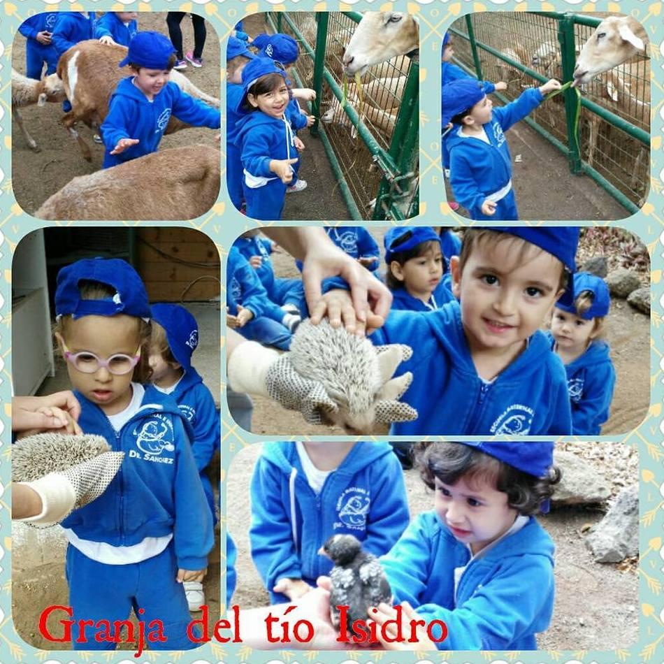 Foto 237 de Guarderías y Escuelas infantiles en Las Palmas de Gran Canaria | Escuela Maternal Infantil Dr.Sánchez